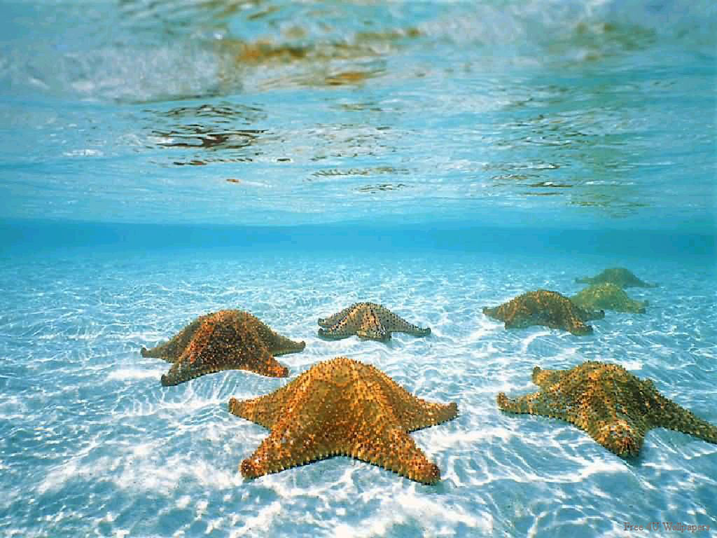 underwater beach wallpaper - photo #20
